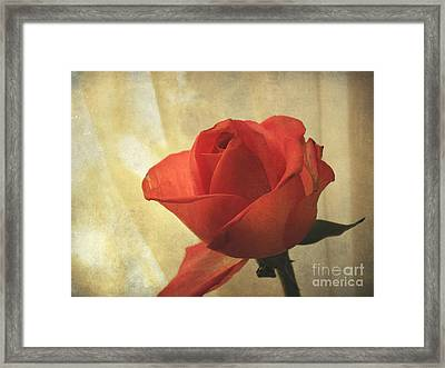 Framed Print featuring the photograph Yesterday's Rose by Jacqi Elmslie