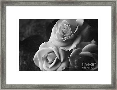 Yesterdays Roses Framed Print