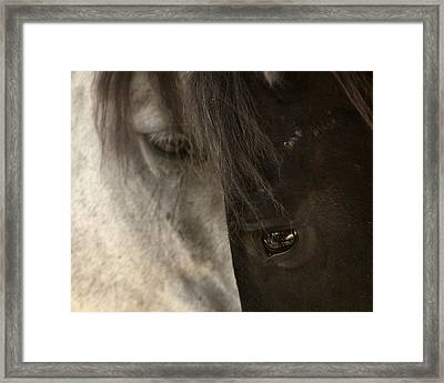 Ying And Yang Framed Print by Ron  McGinnis