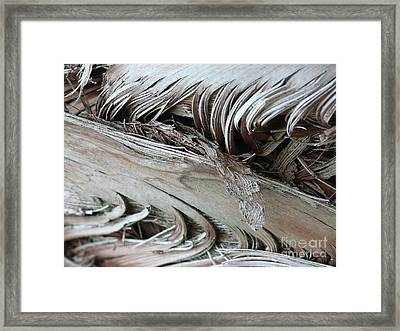 Ying Yang Framed Print by Donna McLarty