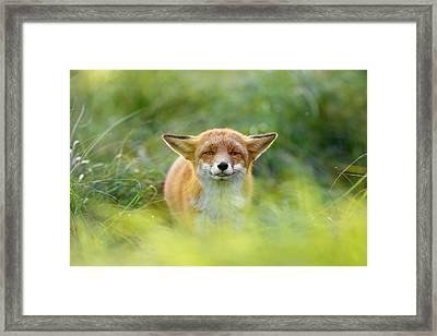 Yoda - Funny Fox II Framed Print by Roeselien Raimond