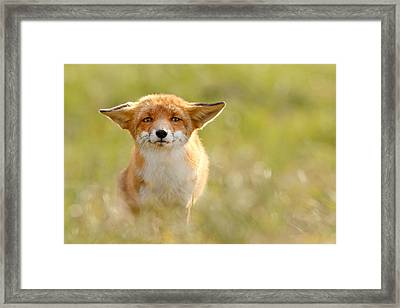 Yoda - Funny Fox Framed Print by Roeselien Raimond