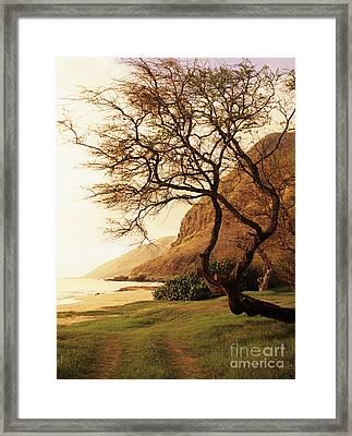 Yokohama Bay Tree Framed Print