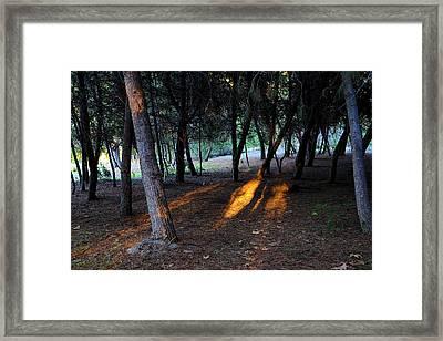 Yorba Regional Park Framed Print