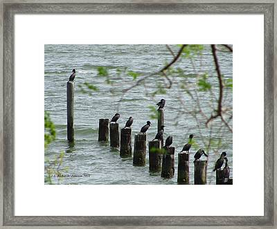 York River Cormorants Framed Print