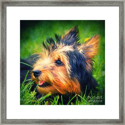 Yorki Framed Print by Angela Doelling AD DESIGN Photo and PhotoArt