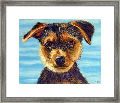 Yorkie Little Swimmer Framed Print by Lyn Cook