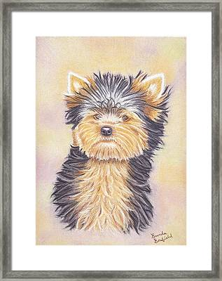 Yorkie Puppy Framed Print