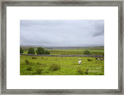Yorkshire Dales With The Ribblehead Viaduct  Framed Print by Patricia Hofmeester
