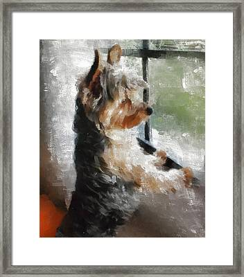 Yorkshire Terrier  Its Warm In Here But So Much More Interesting Out There Framed Print