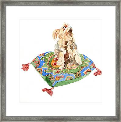 Yorkshire Terrier Framed Print by Jennifer Abbot