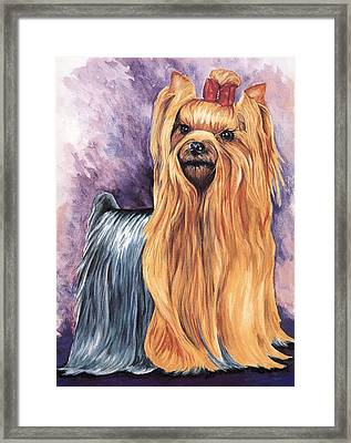 Yorkshire Terrier Framed Print by Kathleen Sepulveda