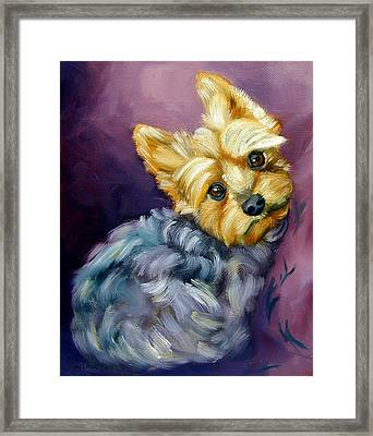 Yorkshire Terrier Yorkie Snuggles Framed Print by Lyn Cook