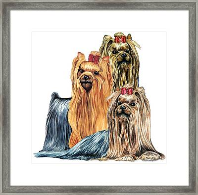 Yorkshire Terriers Framed Print by Kathleen Sepulveda