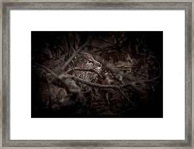 Yosemite Bobcat  Framed Print by Ralph Vazquez