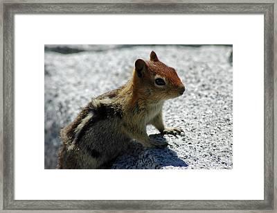 Yosemite Chipmunk Framed Print by LeeAnn McLaneGoetz McLaneGoetzStudioLLCcom