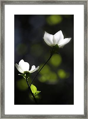 Yosemite Dogwoods 2 Framed Print by Larry Marshall