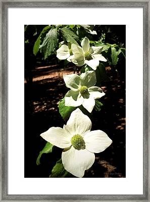 Yosemite Dogwoods Framed Print
