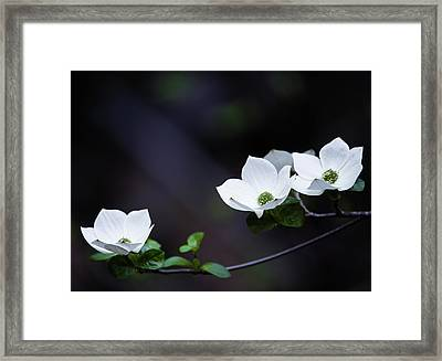 Yosemite Dogwoods Framed Print by Larry Marshall