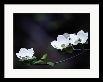 Dogwood Lake Photographs Framed Prints