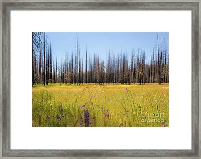 Yosemite Juxtaposition By Michael Tidwell Framed Print