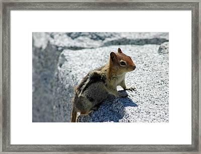Yosemite Timber Tiger Aka Chipmunk Framed Print by LeeAnn McLaneGoetz McLaneGoetzStudioLLCcom