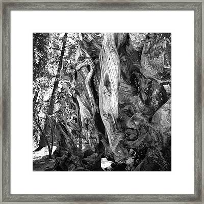Framed Print featuring the photograph Yosemite Trees - Twisting by Dave Beckerman
