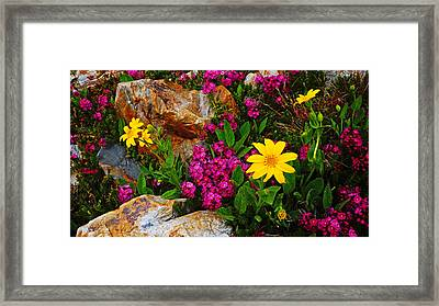Yosemite Wildflowers Framed Print