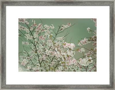 Yoshino Cherries Jade Framed Print