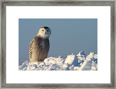 You Are My Focus Framed Print