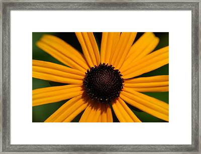 You Are My Sunshine Framed Print by Mandy Wiltse
