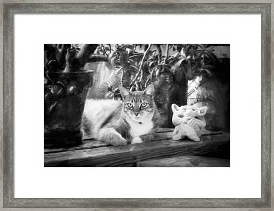 You Both Lookin At Me Ginger Cat Bw Framed Print