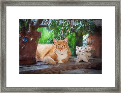 You Both Lookin At Me Ginger Cat Framed Print