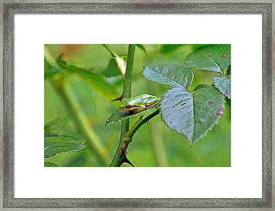 You Can Not See Me Framed Print