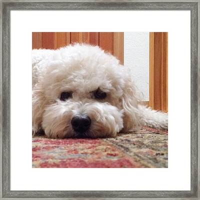 You Can't Help But Smile At A Face Framed Print