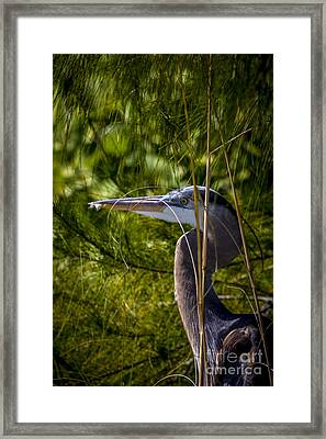 You Can't See Me Framed Print by Marvin Spates