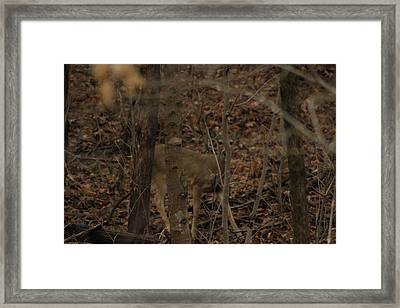 I See You  Framed Print by Charles Cook