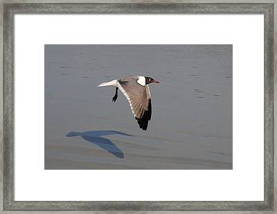 You Following Me Framed Print