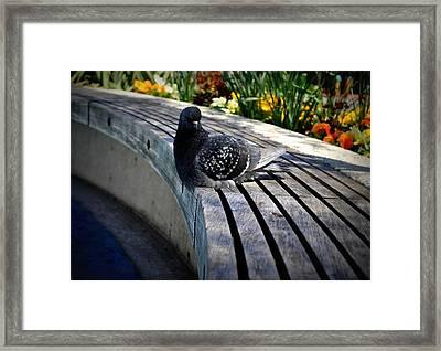 You Gotta Be Pigeon Me Framed Print by Brynn Ditsche