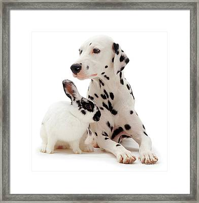 You Knocked My Spots Off Framed Print