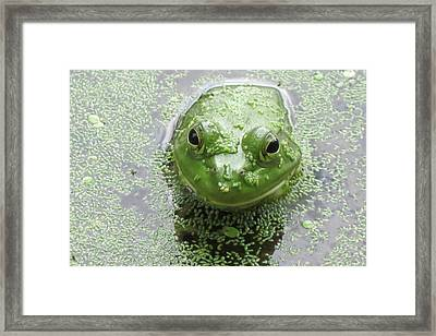 You Look Good In Green Framed Print