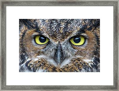 You Look Tasty Framed Print by Brent L Ander