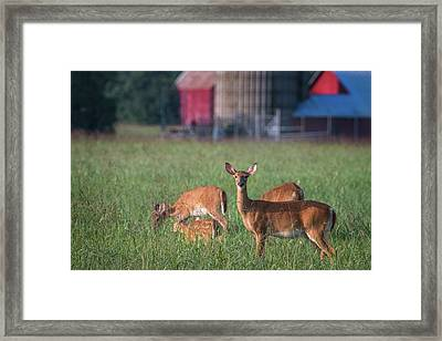 Framed Print featuring the photograph You Lookin' At Me? by Cindy Lark Hartman