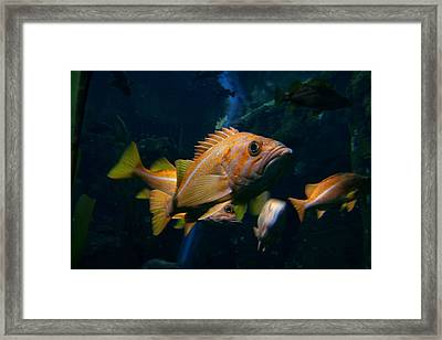 You Lookin At Me Framed Print by Garry Kaylor