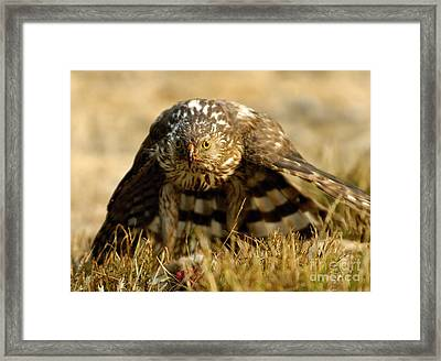 You Lookin At Me Framed Print by Marc Bittan