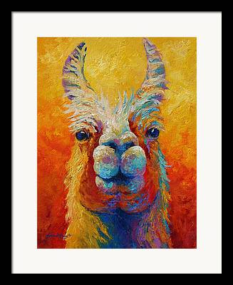 Ewes Framed Prints