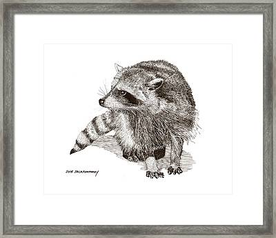 You Looking At M E  Randy Raccoon Framed Print