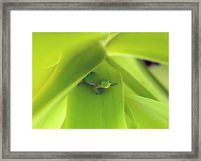 You Looking At Me Buddy Framed Print