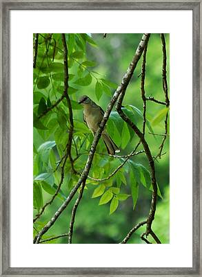 You Looking At Me Framed Print by David Lane