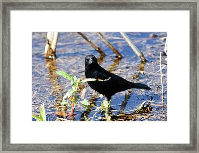 Framed Print featuring the photograph You Looking At Me by Gary Wightman